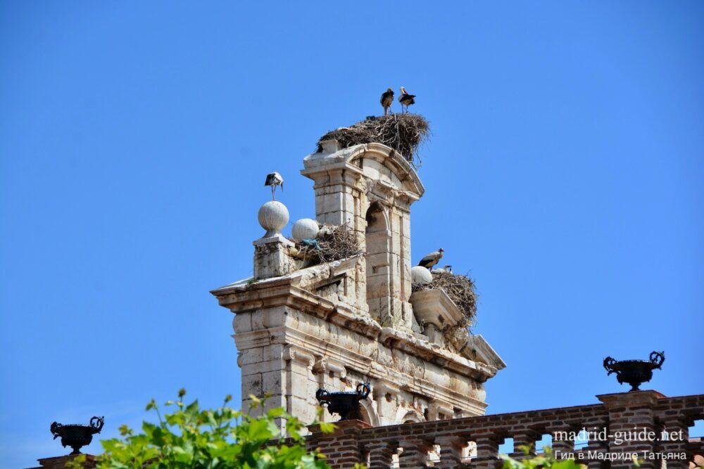 Экскурсия в Алькала-де-Энарес - Аисты