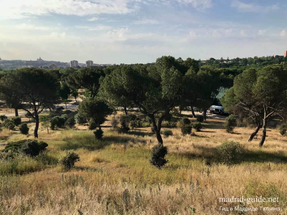 Парки в Мадриде