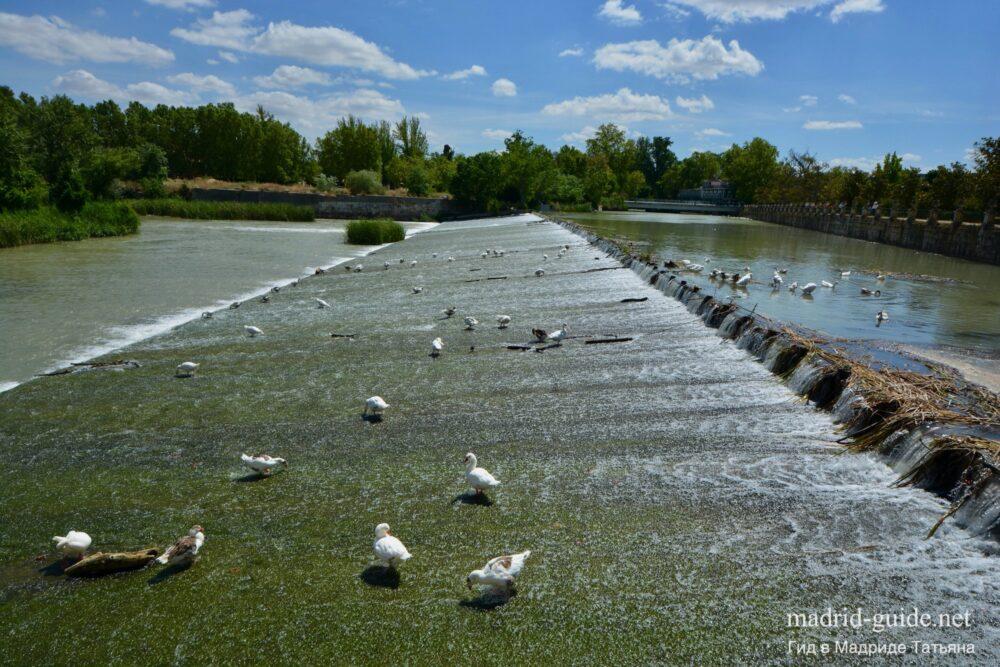 Река Тахо в Аранхуэсе